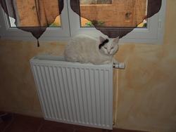 Tippex, chat Gouttière
