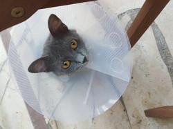 Ecaux, chat