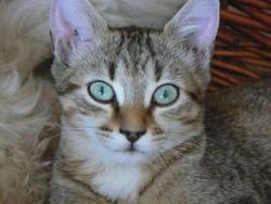 Bonnie, chat Gouttière