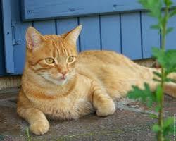 Lecki, chat