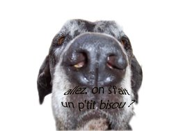 Roxane, chien Dogue allemand