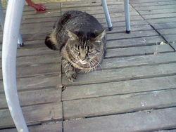 Doudou, chat Gouttière