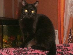 Manbo Et Wiskie, chat Gouttière