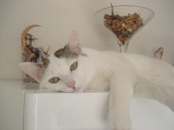Estelle, chat
