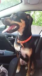 Eddy, chien