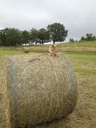 Eden, chien Chihuahua