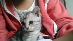 Eden, chat Gouttière