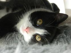 Edgar, chat Gouttière