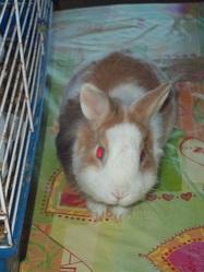 Edgar, rongeur Lapin