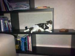 Edgard, chat Gouttière