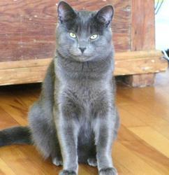 Édouard, chat