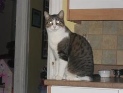 Edward, chat Gouttière