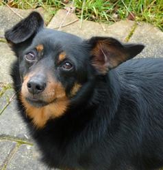Pedro, chien