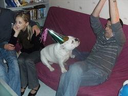 Dixie, chien Bulldog