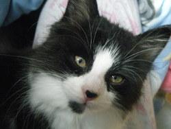 Winnie, chat