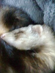 Effy, rongeur