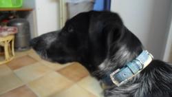 Eika, chien Border Collie