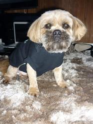 Eiko, chien Lhassa Apso