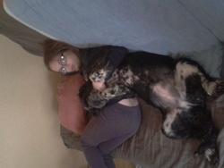 Eileen, chien Chien d'eau espagnol
