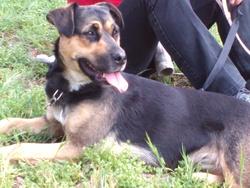 Elaya, chien