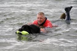 Elbe, chien Terre-Neuve