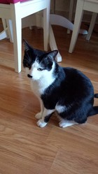 Eléctron, chat Gouttière