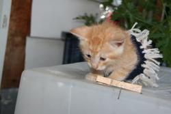 éléonar, chat