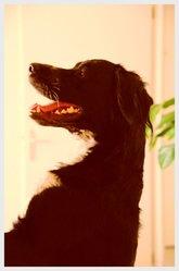Elhia, chien