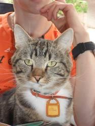 Elhiot, chat Gouttière