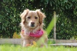 Elia, chien
