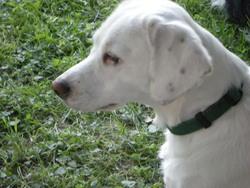 Elicia, chien