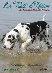 Elios, chien Dogue allemand