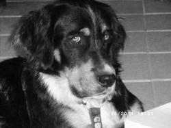 Eliot, chien