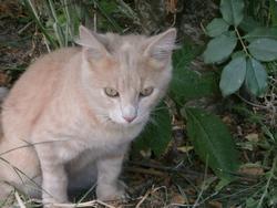éliott, chat Gouttière