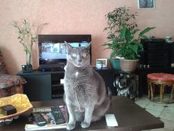 Eliott Dit Titi, chat