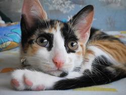Elise, chat Gouttière