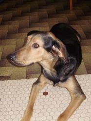 Ella, chien