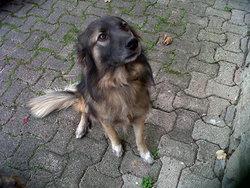 Ellios, chien