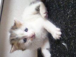 Elliot, chat Gouttière