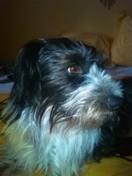 Elliot, chien