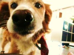 Elliot , chien