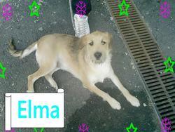 Elma, chien