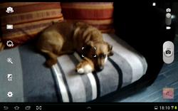Elmo, chien Teckel