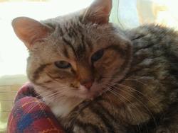 Eloura Au Paradis Des Chats, chat Gouttière