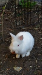 Elric, rongeur Lapin