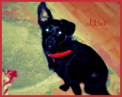 Elsa, chien