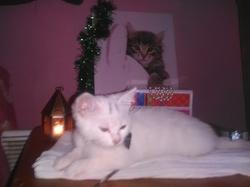 Elsa, chat Gouttière