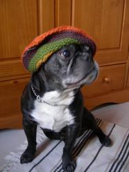 Elton -Bidouille -Framboise, chien Bouledogue français