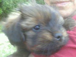 Elvis, chien