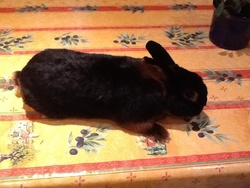 Elvis, rongeur Lapin